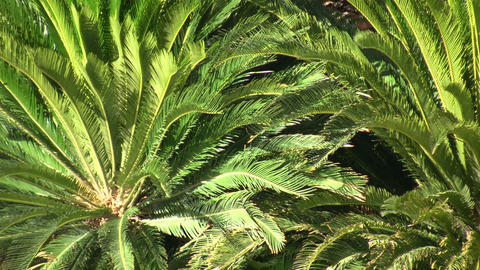 Tropical plants gently sways in the breeze (High Definition) Stock Video Footage