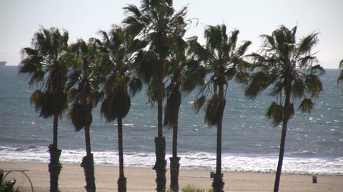 Palm trees sway in wind amidst blue ocean (High Definition) Stock Video Footage
