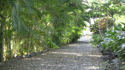Gravel path with tropical plants and shadows (High... Stock Video Footage