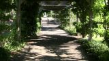 Walking Trail Cuts Through The Treeline (High Definition) stock footage