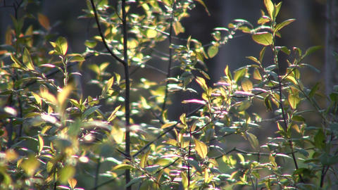 Leaves of a plant are swaying in wind (High Definition) Stock Video Footage