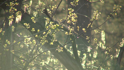 Leaves are bathed in sunlight amidst flying bugs (High... Stock Video Footage