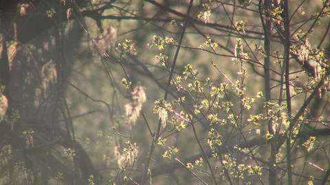 Leaves are bathed in sunlight amidst flying bugs (High Definition) Footage