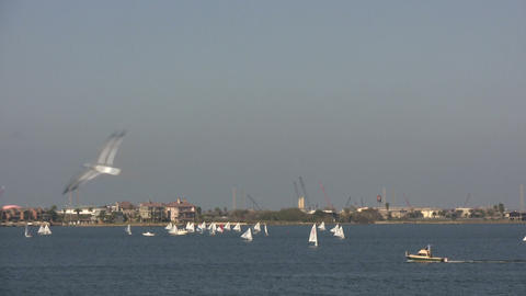 Sailboats move through the Offatts Bayou on a sunny day Stock Video Footage
