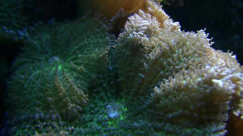 Coral is gently swaying in the water Stock Video Footage