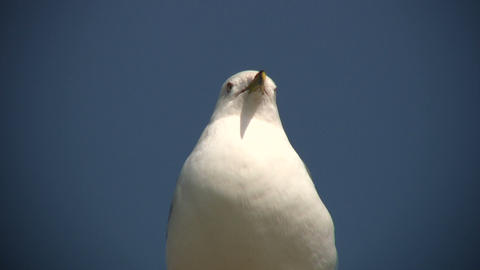 Seagull casually looks around as it rests (High Definition) Stock Video Footage