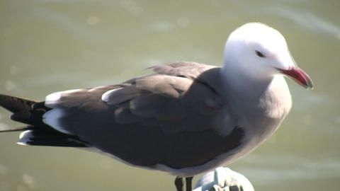 Seagull rests on a railing amidst sunny day (High... Stock Video Footage