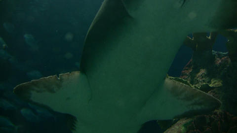 Closeup of a shark swimming through the murky water Stock Video Footage