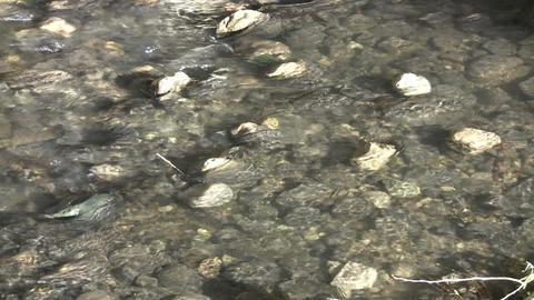 Sunlight illuminates the bottom of shallow stream (High... Stock Video Footage