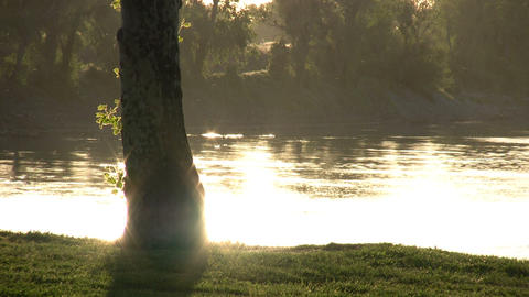 Setting sun is reflecting on water's surface behind a tree Footage
