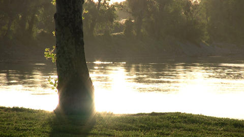 Setting sun is reflecting on water's surface behind a tree Stock Video Footage