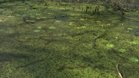 Shot of a quiet swamp on a sunny day Footage