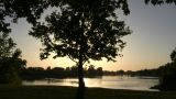 Tree Silhouettes As The Sunset Reflects On The Water stock footage