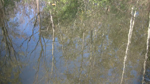 Forest is reflected in the rippling water's surface (High Definition) Footage