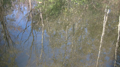 Forest is reflected in the rippling water's surface (High... Stock Video Footage
