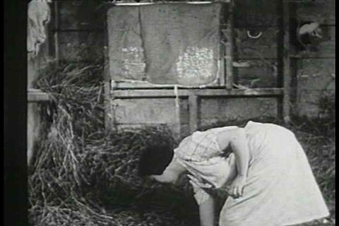 A mother cat has kittens in the barn in 1938 Footage