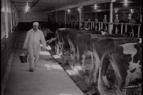 Activities on a dairy farm in 1934 Footage