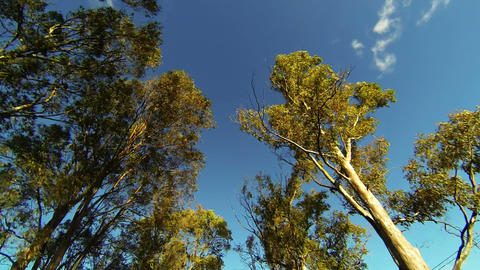 Looking up while driving from road with trees and  Footage