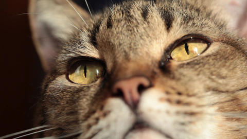 Close-up Of A Cat stock footage