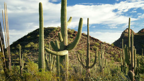 Saguaro National Park Footage