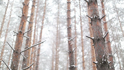 Snowstorm In The Dense Forest stock footage