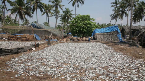 Fish drying in sun Footage
