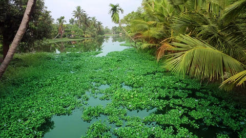 Picturesque scene in Kerala Backwaters Live Action