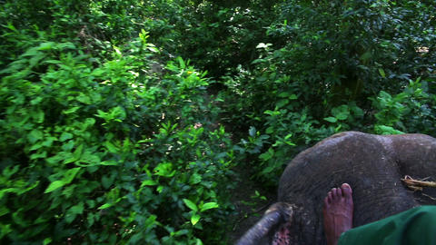 Riding on elephants back, Chitwan, Nepal Footage