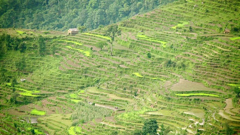 himalayas agriculture rice terrace view Footage