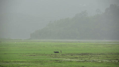 Man ploughing in rice paddy Footage