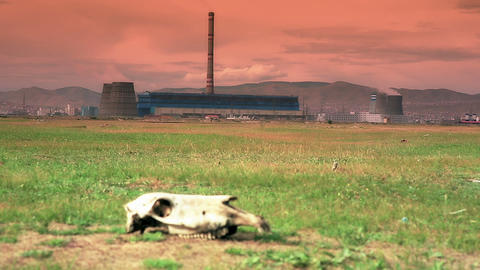 Skull Lying On Grass Next To Power Plant stock footage
