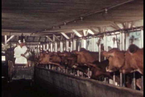 An education film from 1948 about dairy farms and  Footage