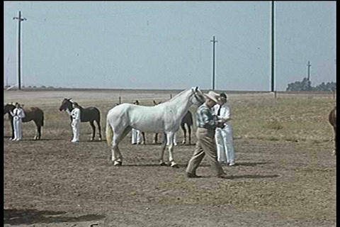 A 1950's horse show Footage