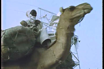 Camels pass a high tech tower in a third world cou Footage