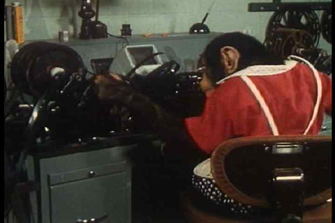 A chimp destroys an editing set-up while another t Footage