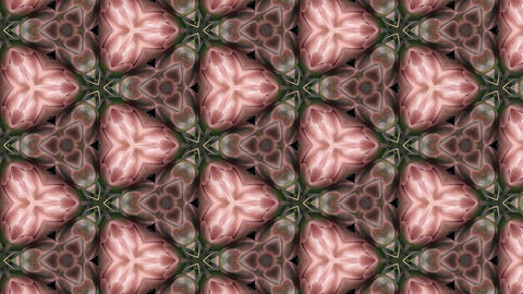 Organic kaleidoscope from blooming pink cactus 15a Animación