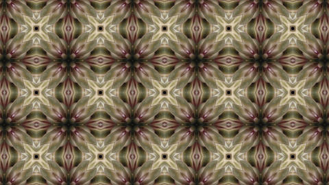 Organic kaleidoscope from blooming white cactus 8a Stock Video Footage