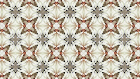 Organic kaleidoscope from blooming white cactus 8a Animation