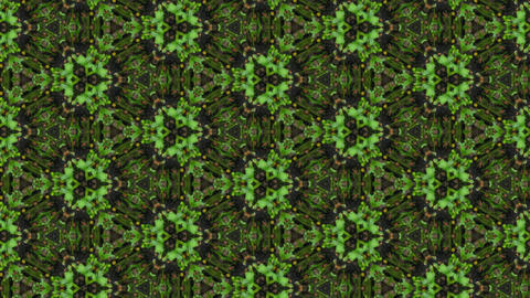 Organic kaleidoscope from growing clover plants 1a Stock Video Footage