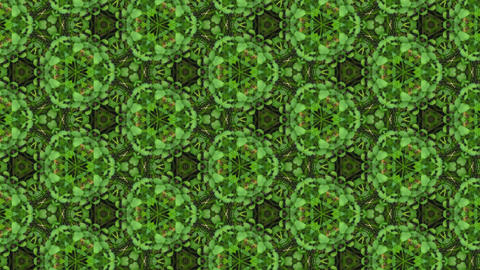 Organic kaleidoscope from growing clover plants 1a Animation