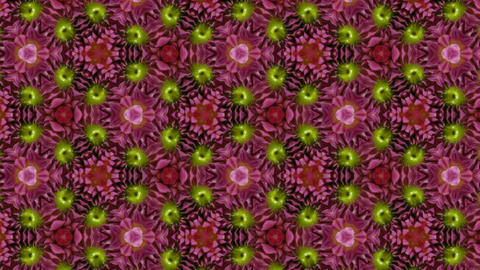 Organic kaleidoscope from blooming red dahlia flower 5a Animation