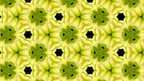 Organic kaleidoscope from blooming white dahlia flower 12a Stock Video Footage