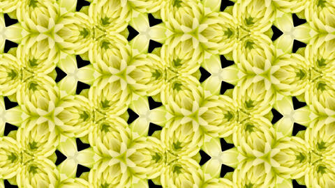 Organic kaleidoscope from blooming white dahlia flower 12a Animation