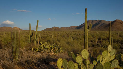 Saguaro National Monument Stock Video Footage