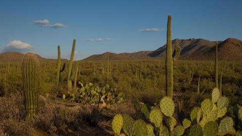 Saguaro National Monument Stock Video Footage