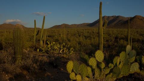 Saguaro National Monument Footage