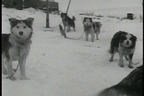 The villagers of an Eskimo town in Alaska hunt wal Footage