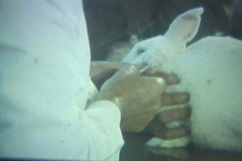 A Doctor Injects Drugs Into A Rabbit To Record The stock footage