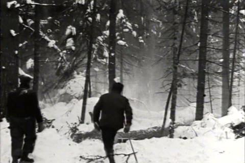 Trucks haul cut logs on sleds in 1935 Footage