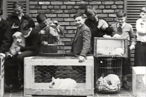 A pet show in 1934 Live Action